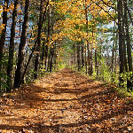 Hike on and off Eastover's 600 acres to October Mountain, MA largest state forest.  You can also hike the nearby Appalachian Trail.